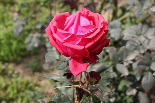 Vermarktung der Liebe - Kommerzialisierung des Valentinstags - 14 Feb 12