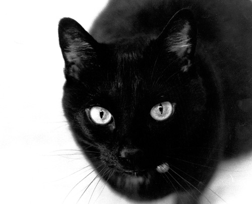 Do superstitious People really believe the Nonsense they are talking about? - 8 Mar 13