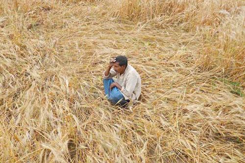 Lasst uns Bauern helfen, deren Getreide komplett zerstört wurde! - 12 Apr 15