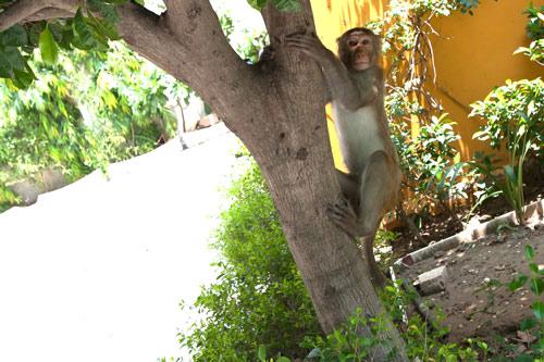 Wenn ein Besuch im Ashram sich anfühlt wie ein Ausflug in einen riesigen Zoo - 20 Okt 15