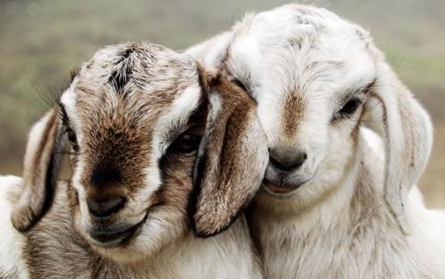 Freut sich dein imaginärer Gott, wenn Millionen unschuldiger Tiere getötet werden? – 13 Sep 16