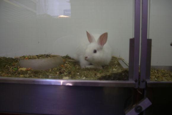 Tiere werden zu Haustieren und verlieren ihre natürliche Freiheit - 29 Jun 11