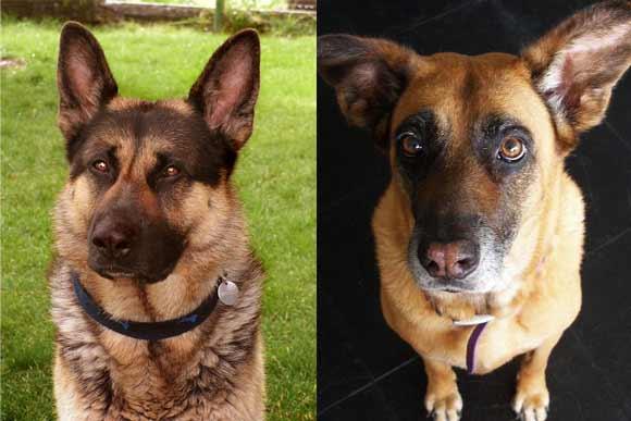 Grausame Züchtung von Hunden und Haustieren mit schmerzvollen Krankheiten - 4 Jul 11