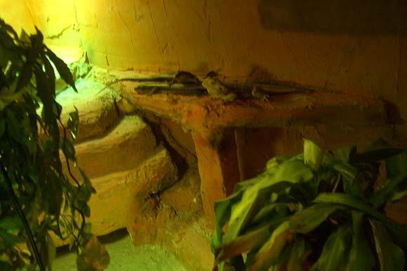 Warum machst du wilde Tiere und Reptilien zu Haustieren? - 5 Jul 11